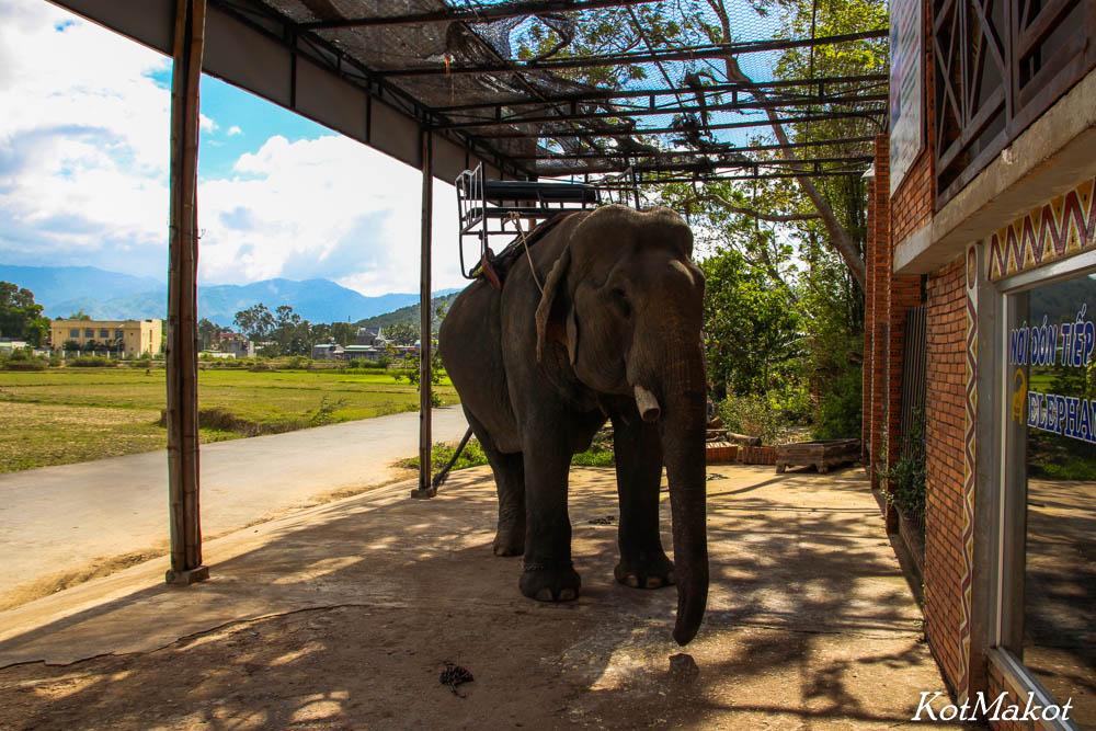 Покататься на слонах в Даклаке