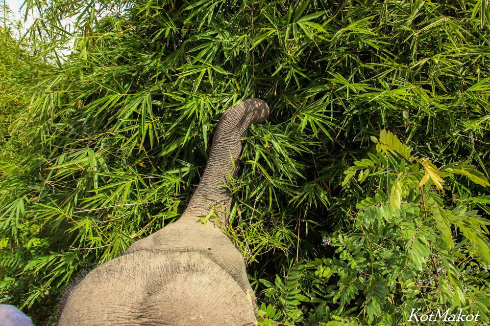 Покататься на слонах в Даклаке-4