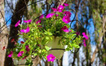 Далат, Парк Цветов, Новый год 2015