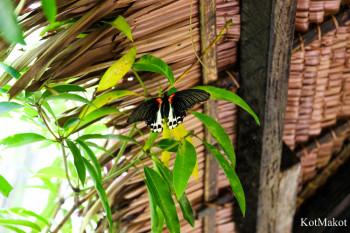 Сад бабочек, Бохоль