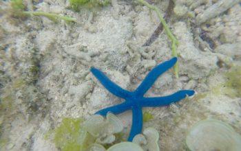 Подводный мир Панглао, Филиппины