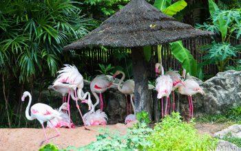 Зоопарк в Паттайе, Таиланд, 2014 год