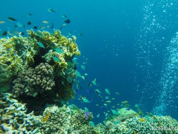 Дайвинг на острове Баликасак, Филиппины