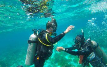 Diving Panglao PADI