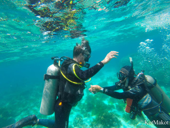 Diving Panglao PADI