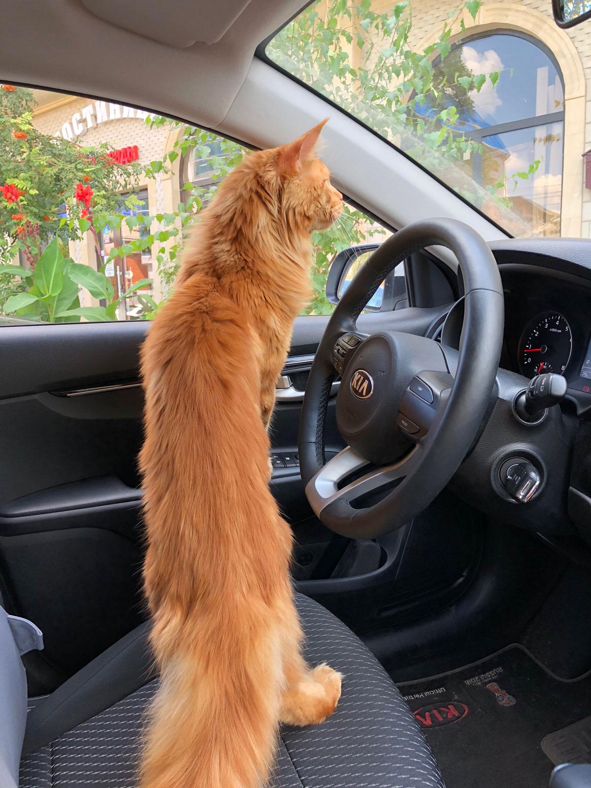 как путешествовать с котом