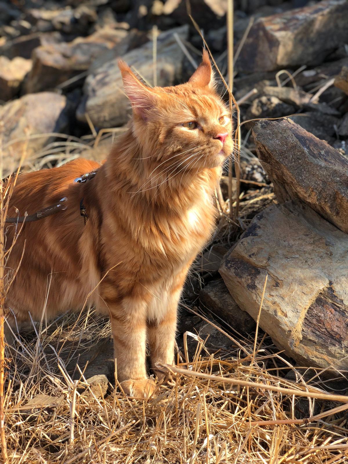документы для перевозки кота