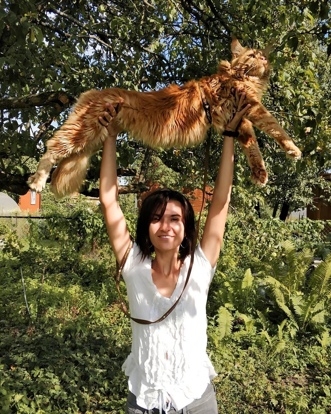 Путешествие с котом