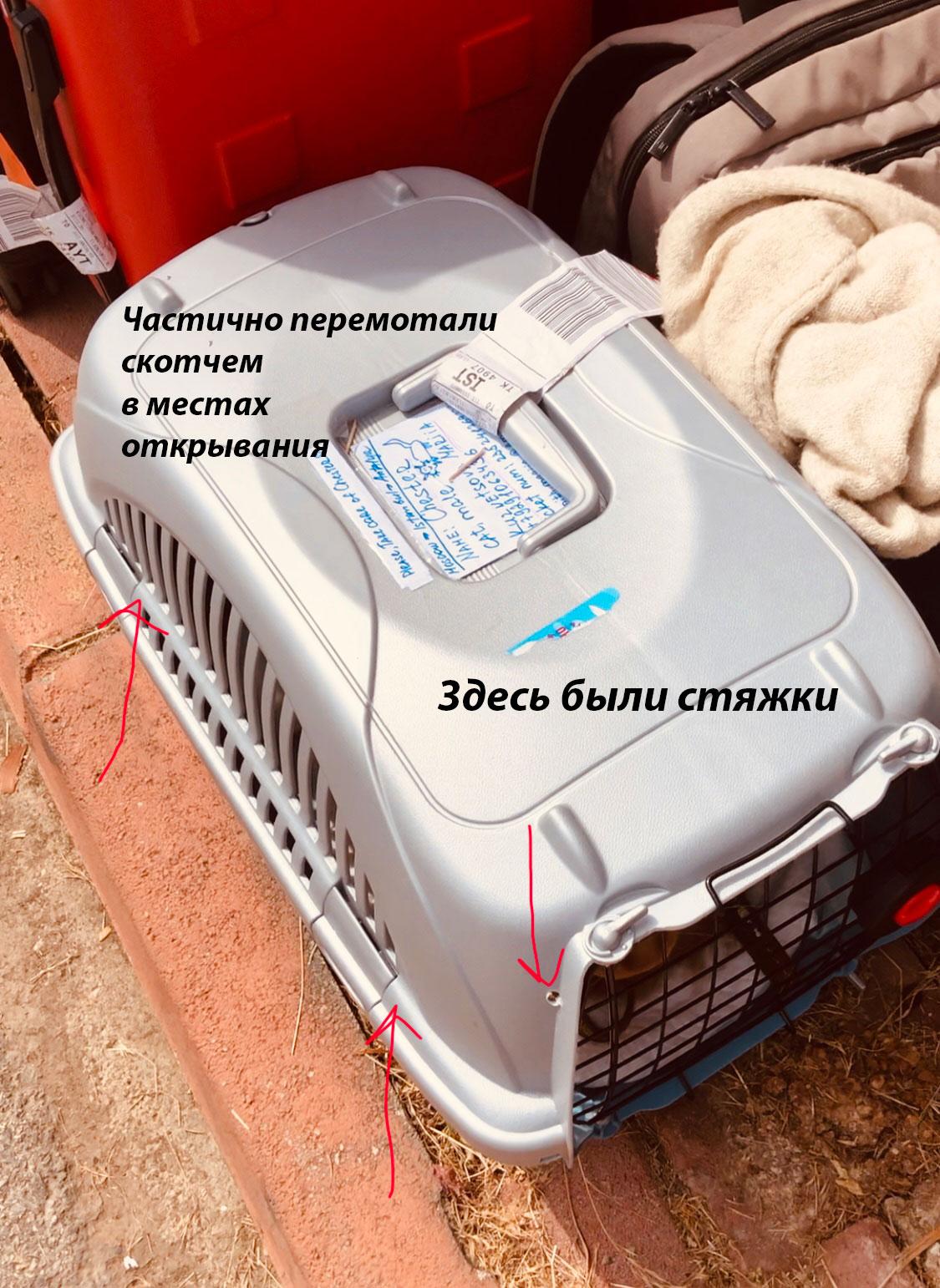Перелет с котом в багажном отделении Turkish Airlines